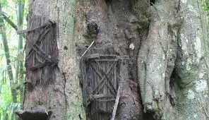यहां पर पेड़ के तने में करते हैं बच्चों के 'मृत शव' को दफ़्न!!