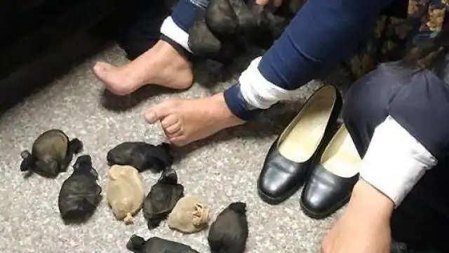 महिला अपने स्कर्ट के अंदर 24 गर्बिल्स (एक प्रकार के चूहे) छुपाकर ले जा रही थी।