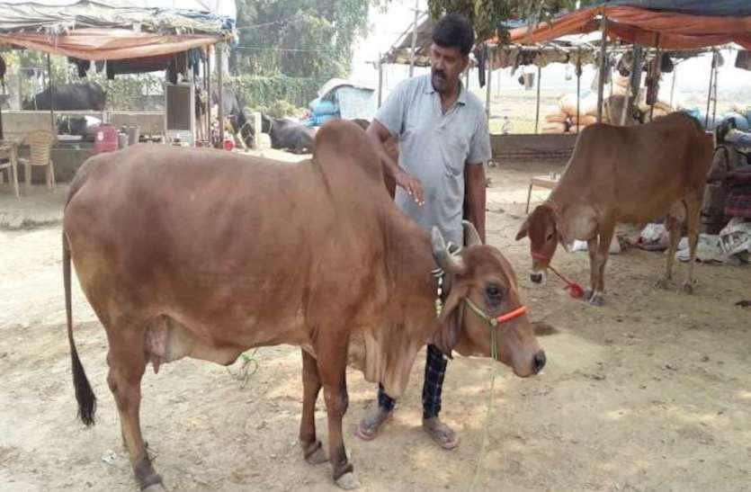 जानिए ,राजस्थान का एक और आकर्षण Cattle fair !