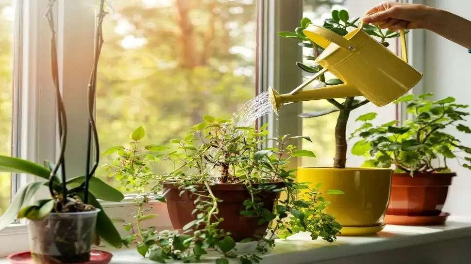 सावधान: घर में गलती से भी ना लगाएं ये पौधा, हो सकता है धन-संपत्ति का भारी नुकसान
